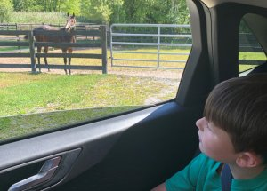 CCE Equine Horse Farm Tour Attracts Over 700 People
