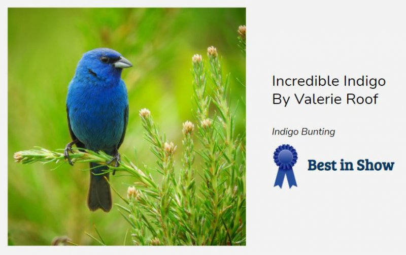 "Best In Show was awarded to Valerie Roof for her image ""Incredible Indigo."""