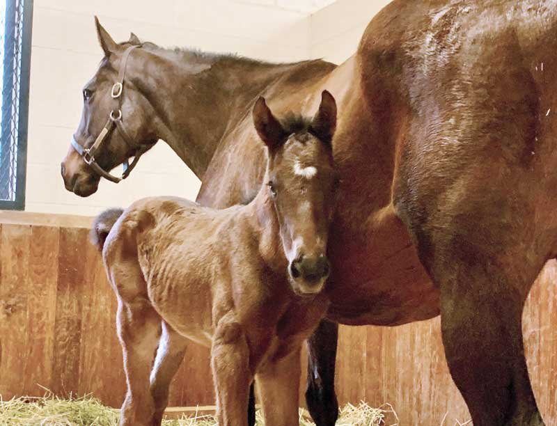 This cute little guy is the first foal born on season three of Foal Patrol! Photo provided.