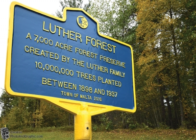 Logging Rights and Alleged Wrongs in Luther Forest