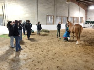Teen Animal Ambassadors Program Offered by Saratoga County 4-H
