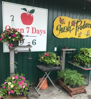Saratoga Apple Orchard Hosts Cherry Blossom Festival on Saturday